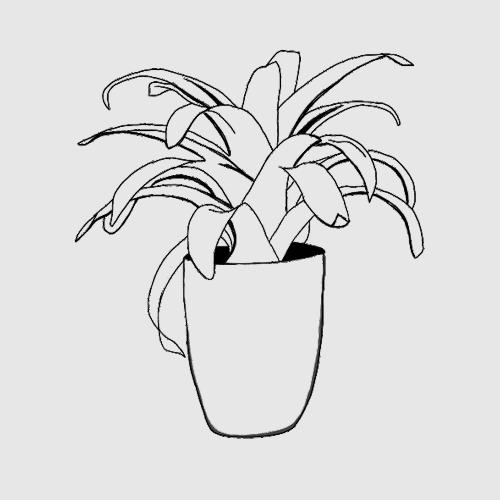 Bromeliad Plants Icon Image